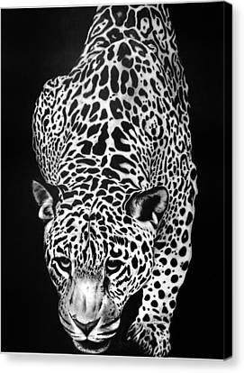 Leopard Canvas Print by Jerry Winick