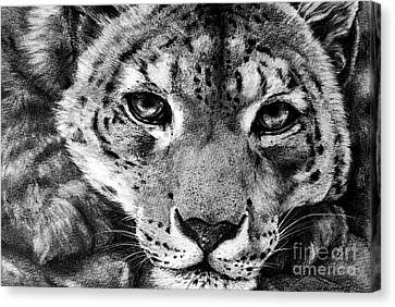 Leopard Canvas Print by Mark Hufford