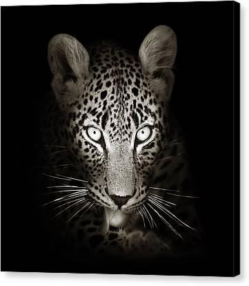 Leopard Portrait In The Dark Canvas Print by Johan Swanepoel
