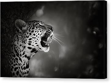 Leopard Portrait Canvas Print by Johan Swanepoel