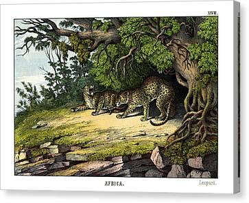 Leopard Canvas Print by Splendid Art Prints