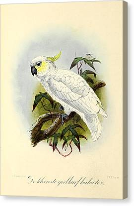 Lesser Cockatoo Canvas Print by J G Keulemans
