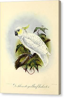 Lesser Cockatoo Canvas Print by J G Keulemans