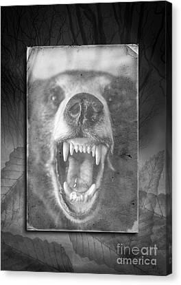 Let Sleeping Bears Lie Canvas Print by Edward Fielding