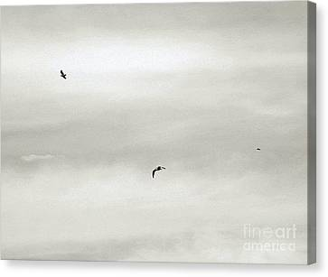 Let Your Spirit Soar Canvas Print by Robyn King