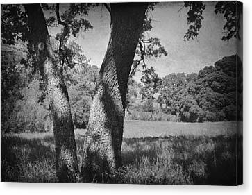 Let's Lay Here Forever Canvas Print by Laurie Search