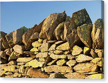 Lichen On A Dry Stone Wall Canvas Print by Ashley Cooper