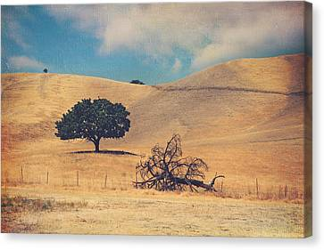 Life And Death Canvas Print by Laurie Search