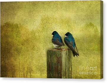 Life Long Friends Canvas Print by Beve Brown-Clark Photography