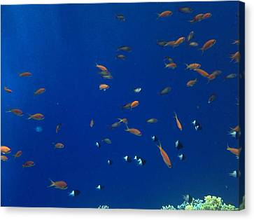 Life Under Water Canvas Print by Isabelle Hansen