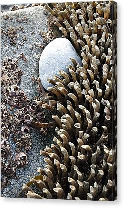 Life's February Border Canvas Print by Tom Trimbath