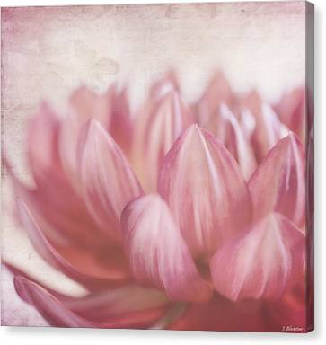 Lift Your Spirit - Vintage Flower Art Canvas Print by Jordan Blackstone