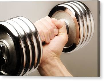 Lifting Weights Canvas Print by Chris and Kate Knorr