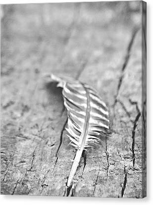 Light As A Feather Canvas Print by Chastity Hoff
