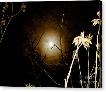 Light In The Dark Canvas Print by Randi Shenkman