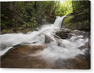 Light In The Forest Canvas Print by Debra and Dave Vanderlaan