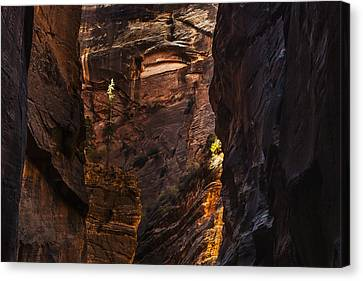 Light Standing Tall Canvas Print by Andrew Soundarajan