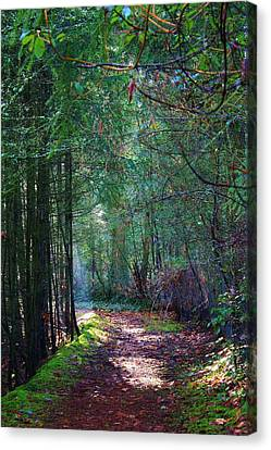 Light The Way Canvas Print by Bruce Bley