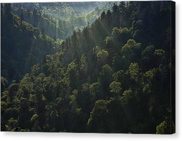 Light Thru The Woods Canvas Print by Andrew Soundarajan