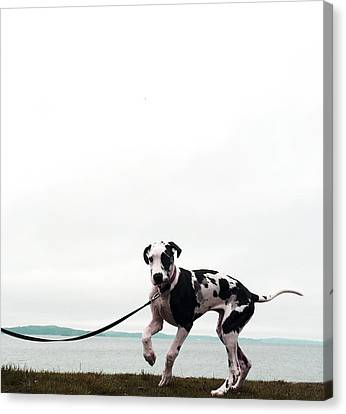 Like A Puppy On A String Canvas Print by Richard Lawrence