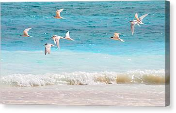 Like Birds In The Air Canvas Print by Jenny Rainbow