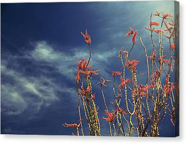 Like Flying Amongst The Clouds Canvas Print by Laurie Search
