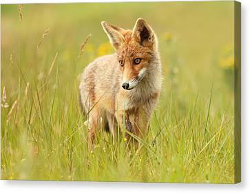 Lil' Hunter - Red Fox Cub Canvas Print by Roeselien Raimond