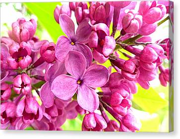 Lilac Closeup Canvas Print by The Creative Minds Art and Photography