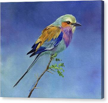 Lilacbreasted Roller Canvas Print by David Stribbling