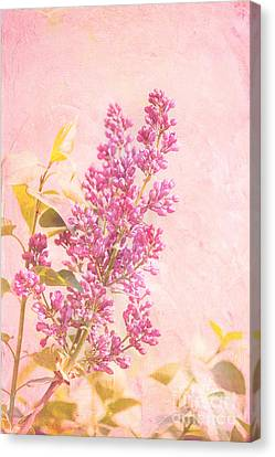 Lilacs In Pink Canvas Print by Kay Pickens