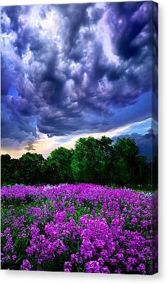 Lilacs Canvas Print by Phil Koch