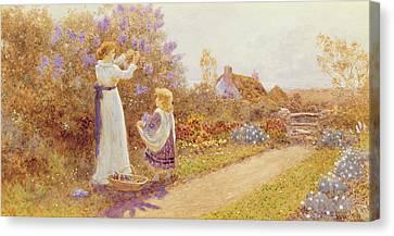 Lilacs Canvas Print by Thomas James Lloyd