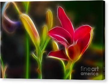 Lilies-6340-fractal Canvas Print by Gary Gingrich Galleries