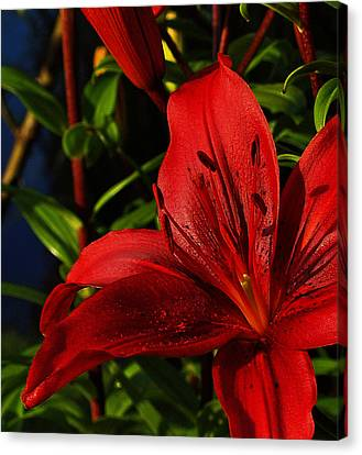 Lilies By The Water Canvas Print by Randy Hall