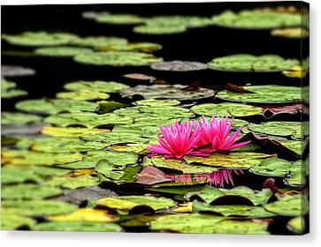 Lilies On Lake Hope Canvas Print by Dick Wood