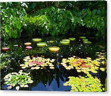 Lilly Garden Canvas Print by Carey Chen