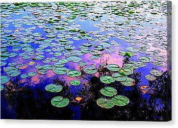 Lilly Pad Sunset Canvas Print by Wendell Lowe
