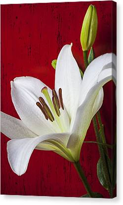 Lily Against Red Wall Canvas Print by Garry Gay
