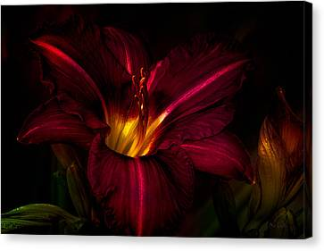 Lily Number Nine Canvas Print by Bob Orsillo
