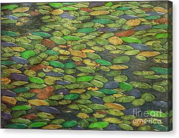 Lily Pads Canvas Print by Tom York Images
