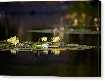 Lily Pond Canvas Print by Peter Tellone