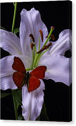 Lily With Red Butterfly Canvas Print by Garry Gay