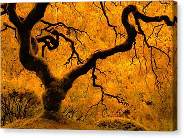 Limned In Light Canvas Print by Don Schwartz
