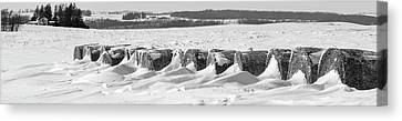 Line Of Bales Drifted With Snow Canvas Print by Panoramic Images