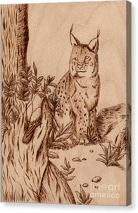 Linx Canvas Print by Jeanette K