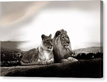 Lion Couple In Sunset Canvas Print by Christine Sponchia
