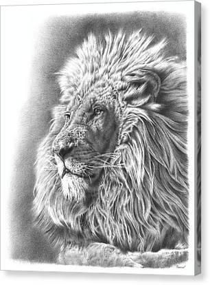 Lion Drawing Canvas Print by Remrov Vormer