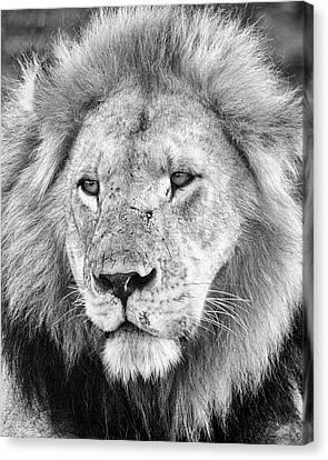 Lion King Canvas Print by Adam Romanowicz