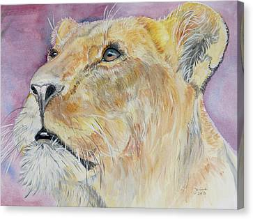 Lioness Canvas Print by Janina  Suuronen