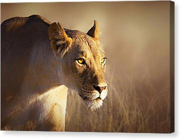 Lioness Portrait-1 Canvas Print by Johan Swanepoel